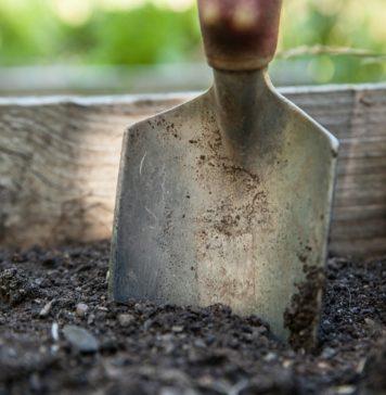 Jak ochronić rośliny przed suszą